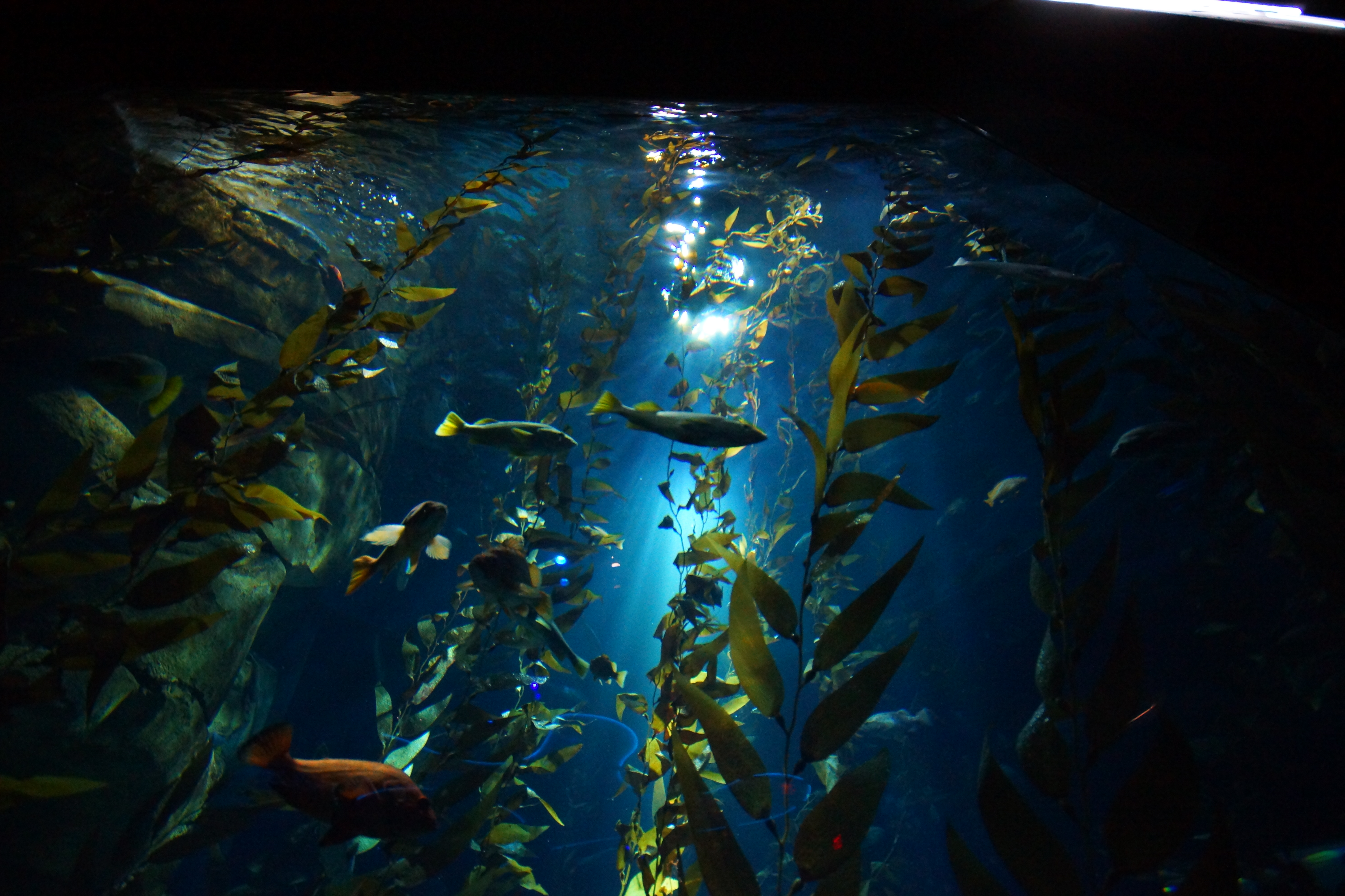 the largest aquarium in america wael ben